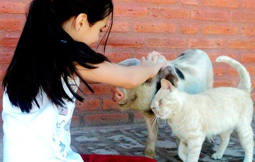 &iquest;Qu&eacute; derechos <em>merecen</em> los animales no humanos?