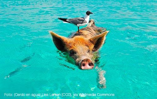Entrevistas sobre derechos para los animales