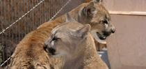 Ciclo: Derechos para animales no humanos