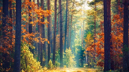 Conferencia: Derechos de la naturaleza