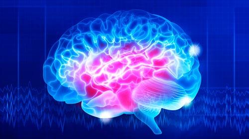 Curso Introducción a la Neurociencia