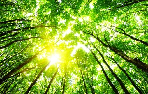 Reflexiones sobre el cambio climático en tiempos de pandemia. ¿Por qué percibimos al COVID 19 como catástrofe y no al cambio climático?