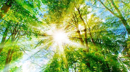 Programa Actualización en Derecho Ambiental y Crisis Climática